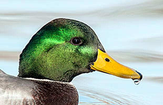 The Duck Test… When is a Biofilter not a Biofilter?